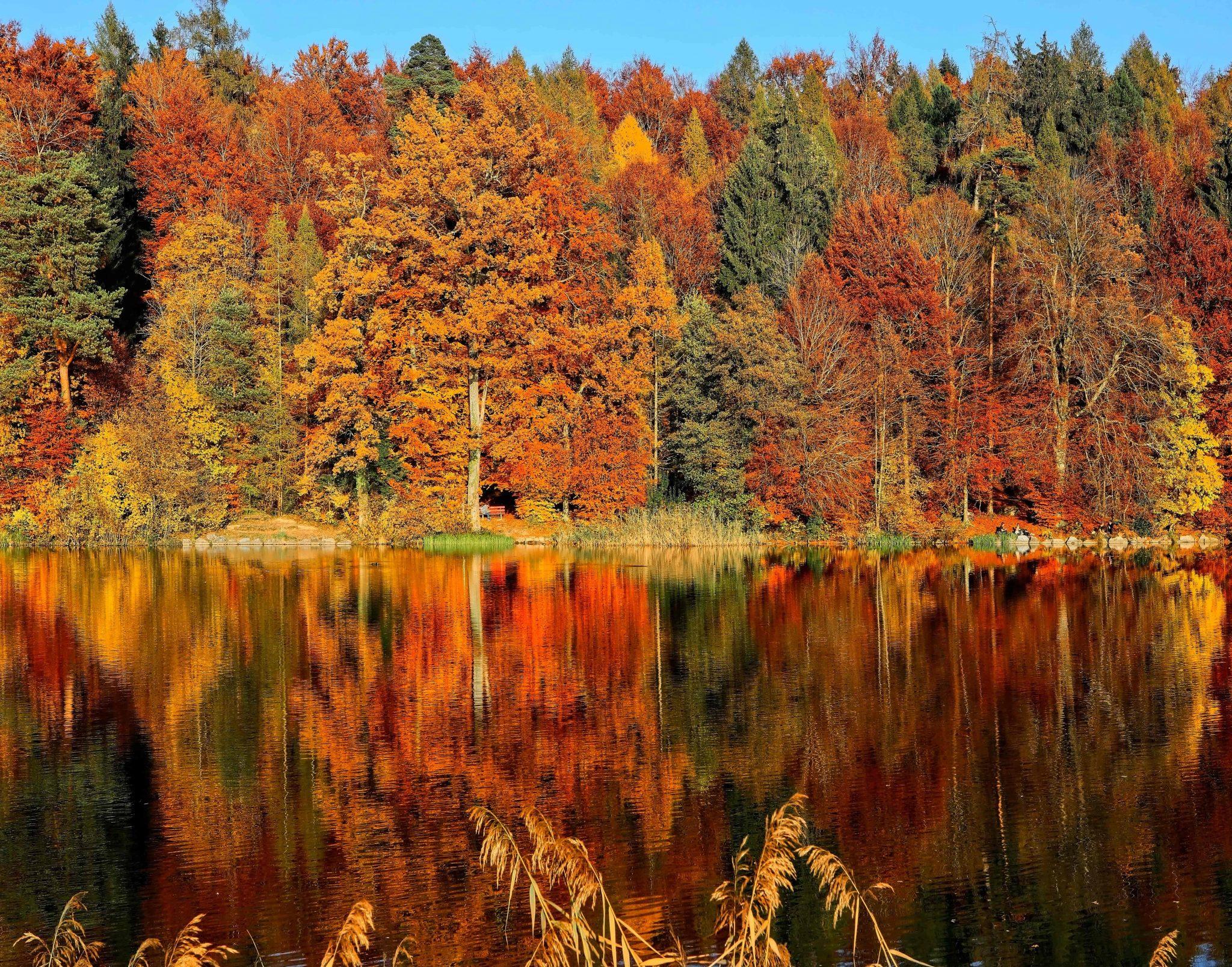 tjärn höst skog